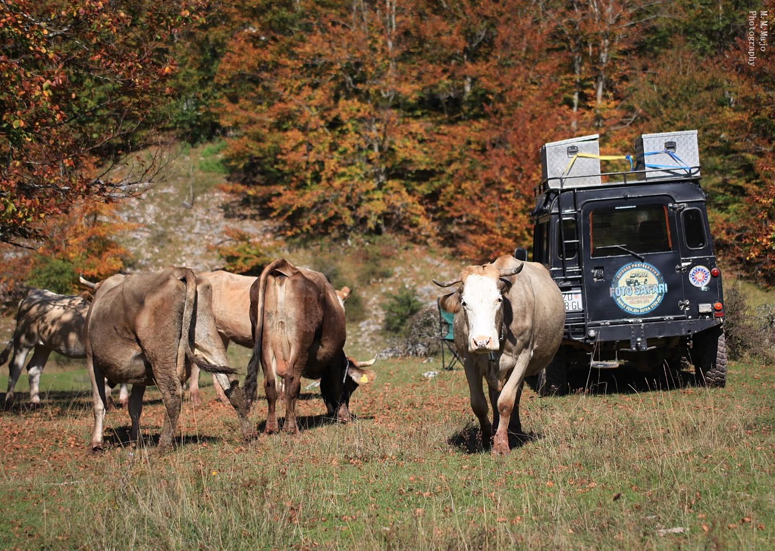 Jeep safari velebit 10
